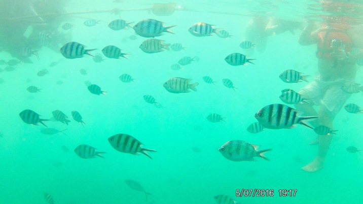 Underwater Friends, Koh Samet