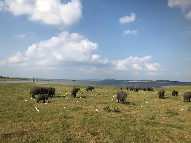 minneriya, elephant safari, jeeps, sri lanka tourism