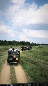 minneriya, elephant safari, jeeps, sri lanka tourism