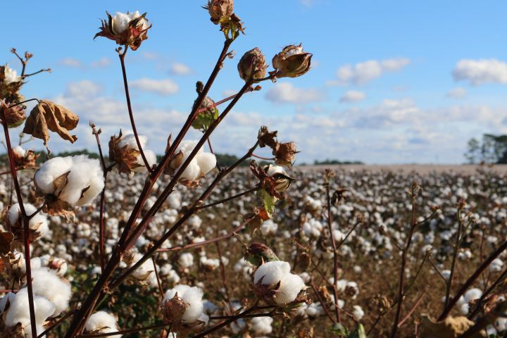cotton, fashion, style, environment, climate change, pollution